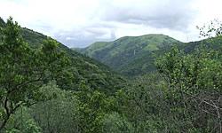 Olive-Grove-Main