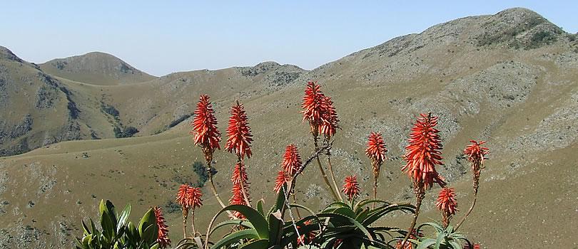 Mountainlands-Nature-Reserve_0124