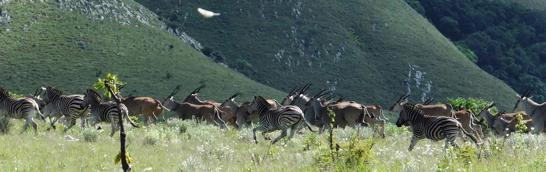 Mountainlands-Nature-Reserve-05-1